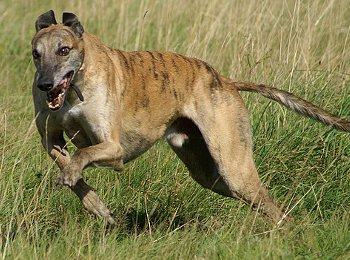 ältester hund der welt